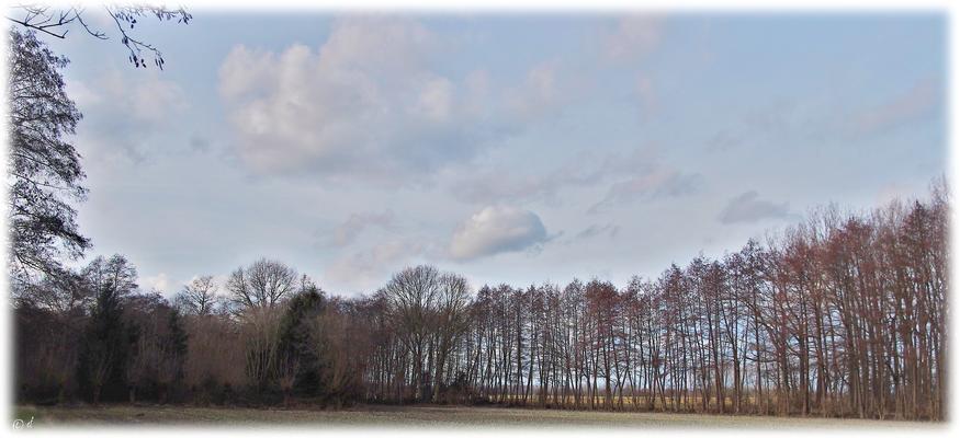 Der Wald- & Bachuferbereich