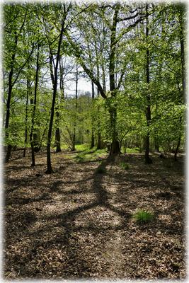 Ein wunderschöner Waldpfad