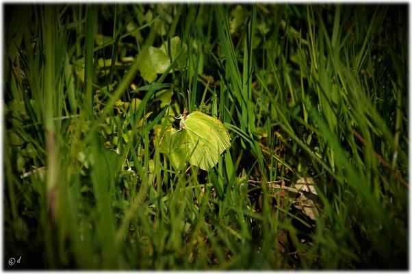 Im Gras in der Sonne lässt es sich gut aushalten