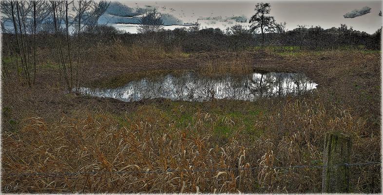 ... & der dritte Teich