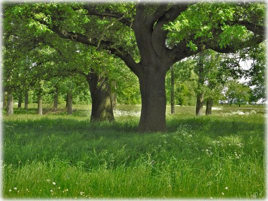 Große Bäume auf den Wiesenflächen spenden Schatten