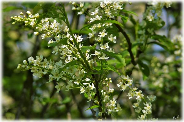 Duftender Frühling
