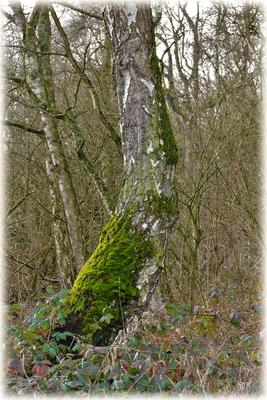 Krummes Wachstum ist in der Natur erlaubt