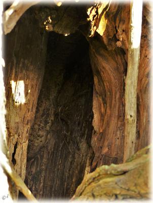 Die Baumhöhle