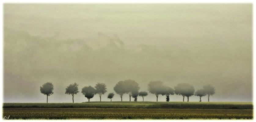 Die neblige Baumreihe