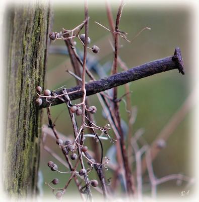 Ein Nagel unter Klettverschluss