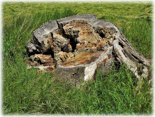 Ein Baumstumpf als neuer Lebensraum- & natürlicher Baumaterialspender