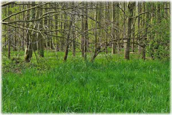 Die unteren Etagen des Waldes