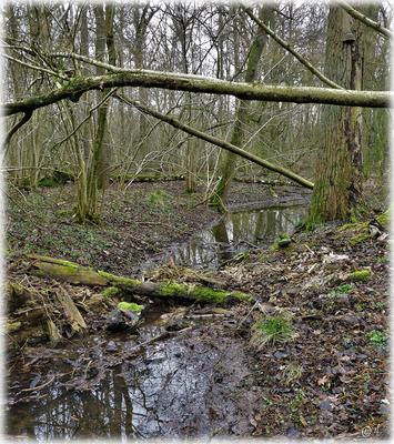 Nach dem Tod - Ein neuer Lebensraum für andere Waldwesen