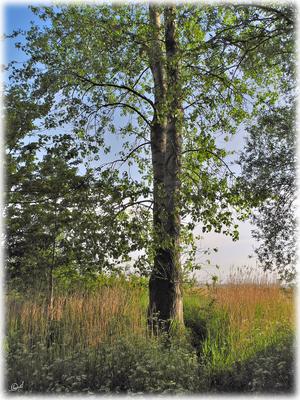 Mein persönlicher Frühlingsbaum