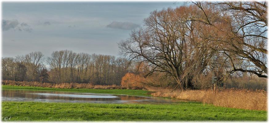 Diverse Blickwinkel auf eine Feuchtwiesenfläche ...