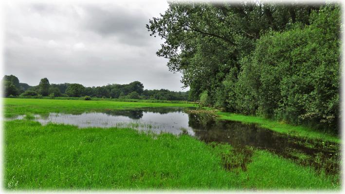 Kleine durch den Regen entstandene Wasserlandschaften