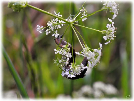 Die Schnecke & die Spinne