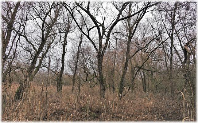 Wilde Schönheit - Die nackten Weiden