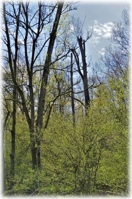 Frühling als Zeichen für neues Leben - Totholz als Zeichen für Artenvielfalt