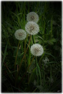 Weiße Leuchtbälle