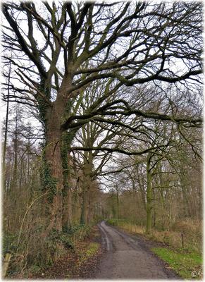Ein Weg ohne Blätterdach