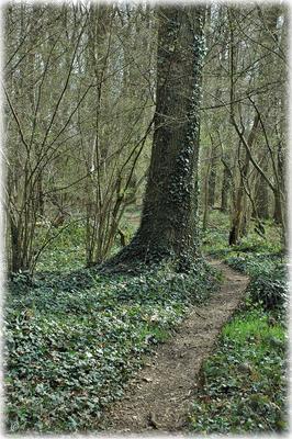 Der kleine Waldpfad