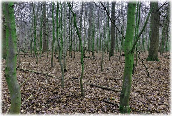 Der Mikado-Wald