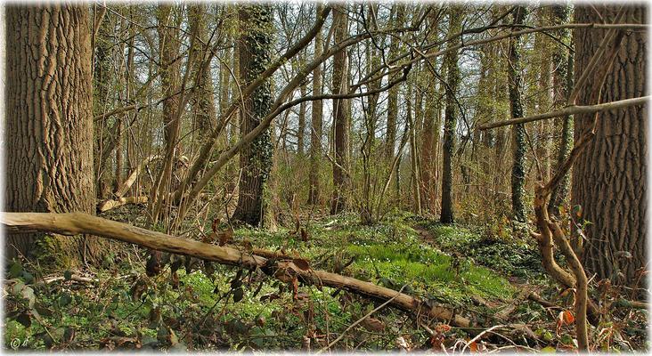 Der verwunschene Waldpfad