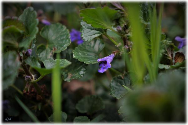 Die Blüten wie kleine Tüten