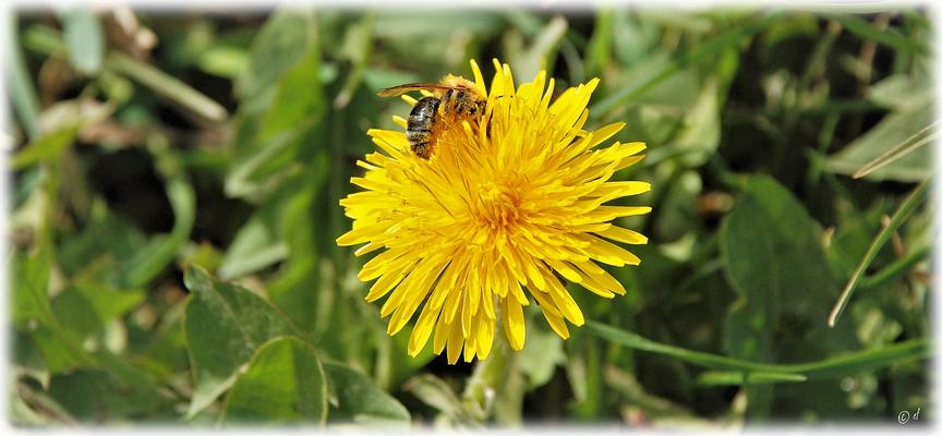 ... wissen das Pollenbad zu schätzen