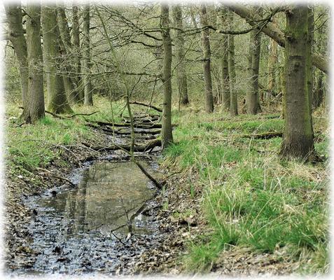 Der Wassergraben ...