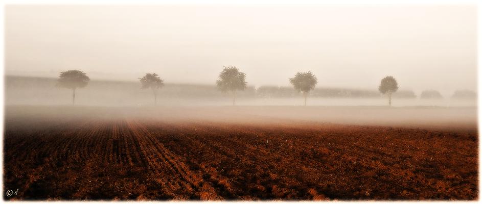 Boden - Nebel - Baumkronen