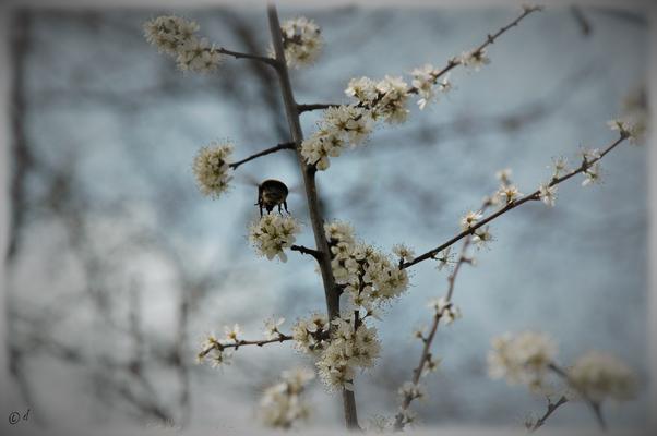 Man fliegt von einer Blüte ...
