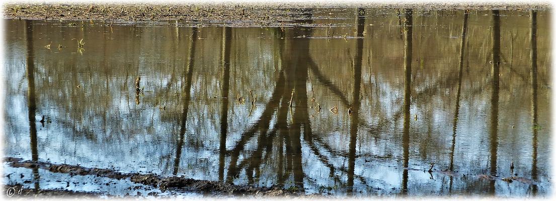 Spiegelungen im Nass der Felder