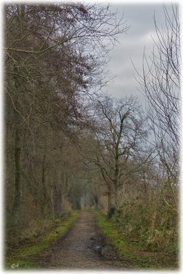 """Ein Waldweg im """"Grauen"""""""
