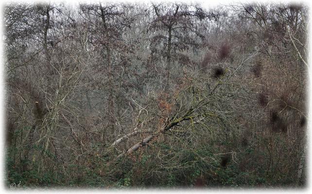 Vom Winde gestürzt, von Bäumen & Büschen getragen