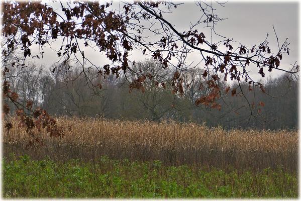 In der Nähe der Naturwaldareale befinden sich Felder & Weiden