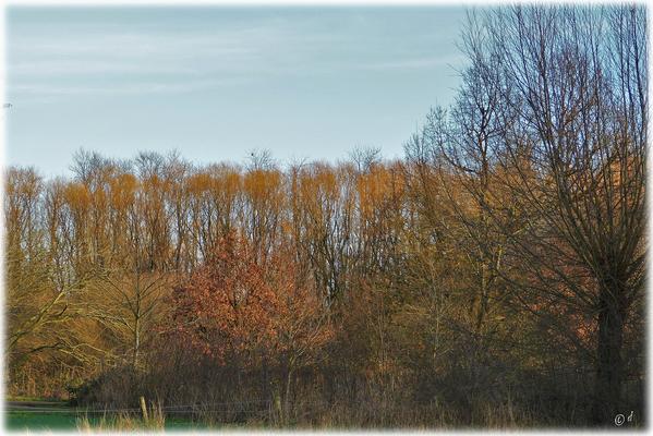 ... Winterfarben