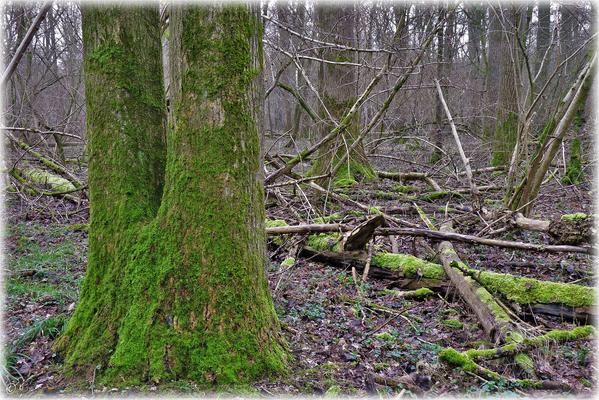 Der grüne Zwilling & seine naturnahe Umgebung