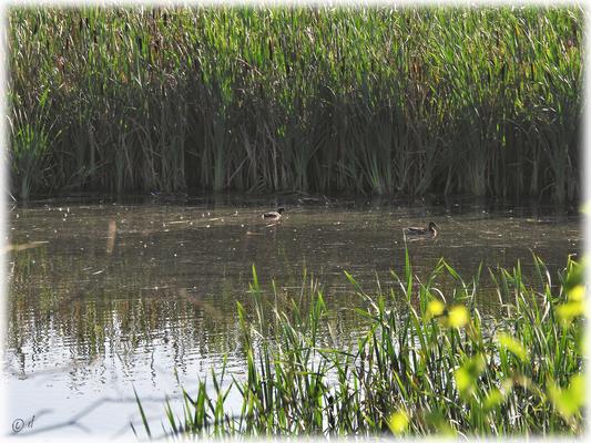 Wasservögelparadiese