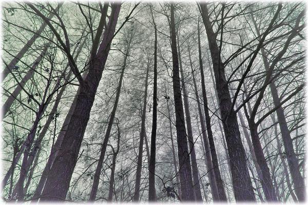 Dem Nebel nahe