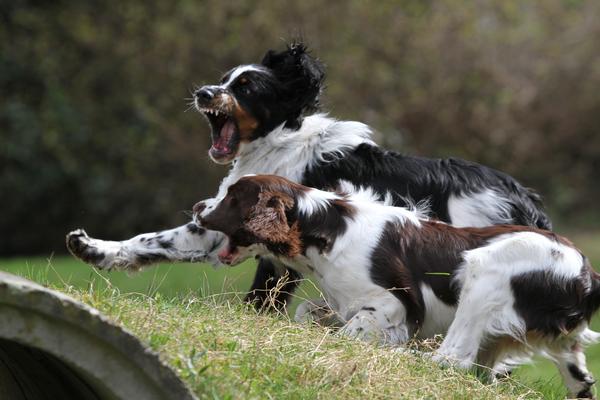 Action mit seiner Schwester Harriet