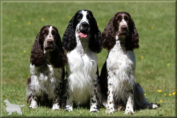 Das Trio Infernale