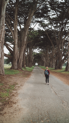 Cypress Tree Tunnel, Kalifornien