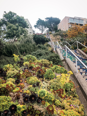 Avenue Tiled Steps, San Francisco