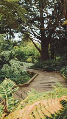 Botanischer Garten, San Francisco