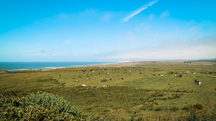 Point Reyes Nationalpark, Kalifornien