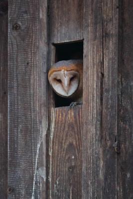 Flügger Jungvogel wartet auf Futter (Foto: Michael Herzig / ca. 21:45 Uhr)