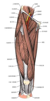 下肢切断術(アンプタ)の術式 大腿切断 - サルコペニアのお話