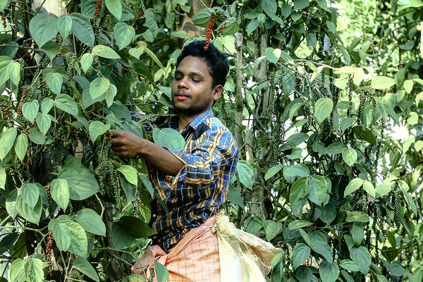 Kleinbauer in Kerala, Indien, über Soul Spice