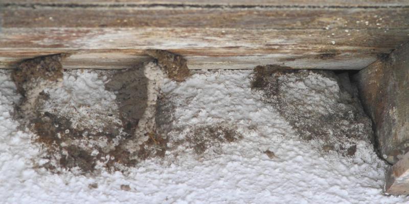 Hier wurden Mehlschwalben-Nester entfernt