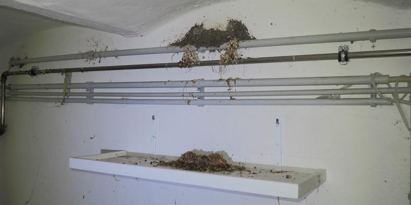 Ein Kotbrett unter dem Nest kann den Grad der Verschmutzung mindern