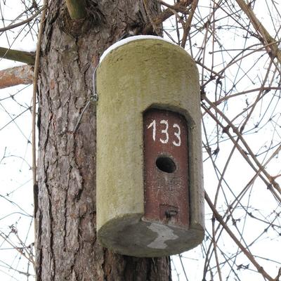Kombi-Kasten für Vögel und Fledermäuse