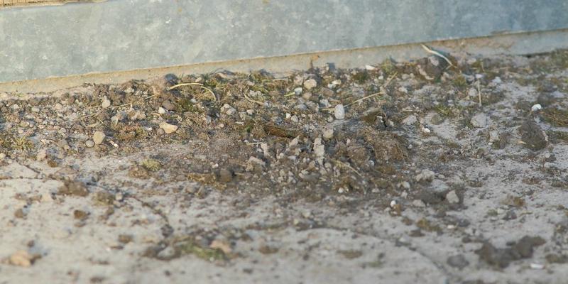 Reste der entfernten Nester am Boden darunter